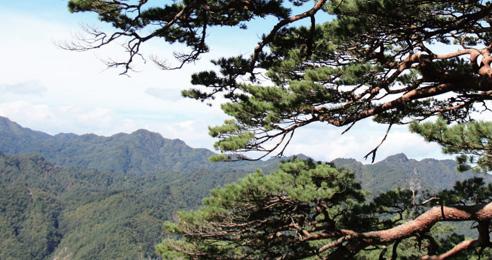 울진 금강소나무 숲길