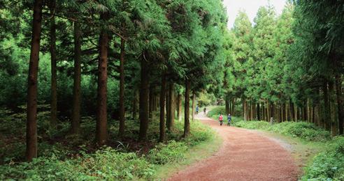 [한국관광공사 추천여행지] 초록빛 에너지 넘치는 명품 숲